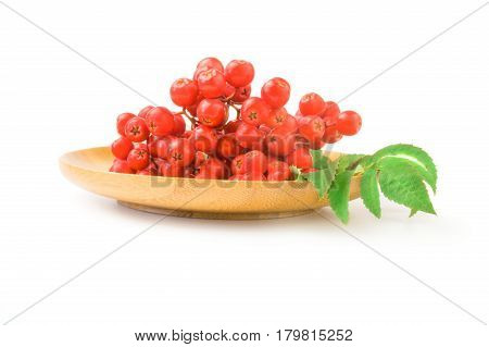 Rowan berries isolated on a white background cutout