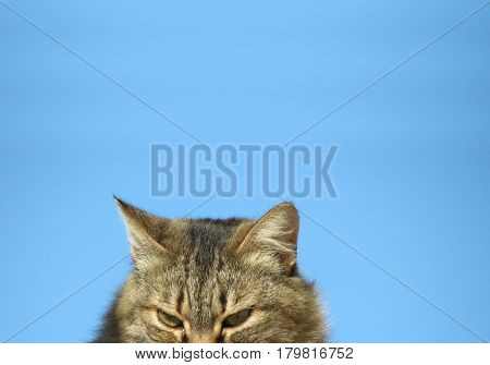 curious cat staring downwards against a blue sky