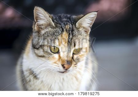 cat pictures,cute cat pictures,cat's eye,the most beautiful cat eyes
