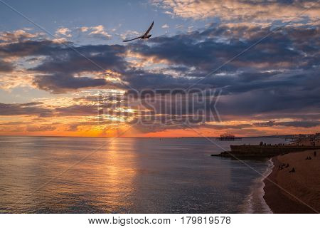 Brighton beach at sunset. Seagul in flight, cloudy sky, west pier in the background