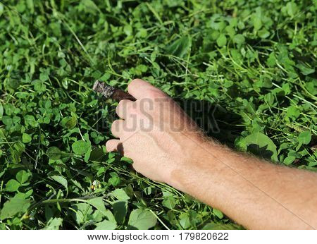 hand of a chain smoker with cigar and grass background