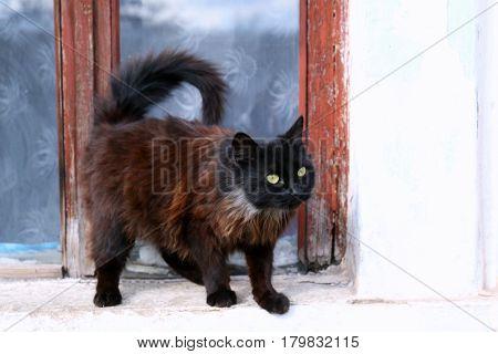 Cat on windowsill outdoor