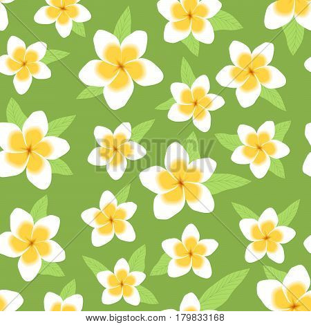 White and yellow tropical plumeria fragrant flowers on green background, seamless pattern for romantic and elegant design, vector illustration