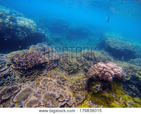 Underwater landscape with pink corals. Tropical seashore perspective photo. Coral ecosystem with sea animal and plant. Exotic island sea snorkeling scene. Natural aquarium. Sea life banner template