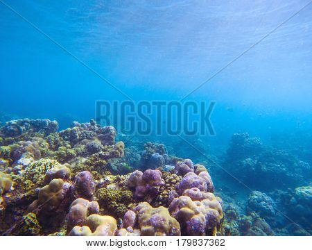 Coral reef with sunlight ray in blue water. Tropical seashore underwater photo. Coral ecosystem with sea animals and plant. Exotic island sea snorkeling scene. Natural aquarium. Sea bottom with corals