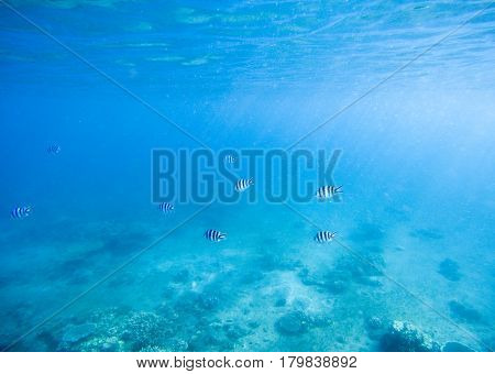 Blue shallow waters with white sand seabottom. Tropical seashore undersea photo. Marine ecosystem with animal in sunlight. Exotic island sea snorkeling scene. Natural aquarium. Sea bottom with fishes