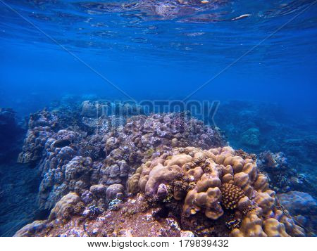 Underwater landscape with coral wall. Tropical seashore perspective photo. Coral ecosystem with sea animal and plant. Exotic island sea snorkeling scene. Natural aquarium. Sea life banner template