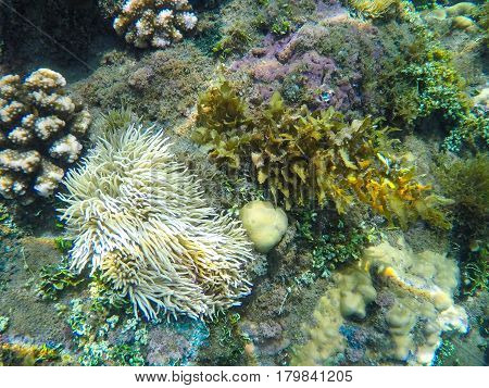 Coral reef formation on the sea bottom. White actinia and corals underwater photo. Seashore plants and animals closeup. Undersea inhabitants ecosystem. Oceanic environment. Exotic seaside wallpaper