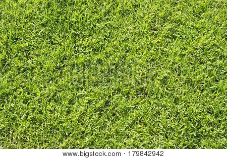 Natural grass photo background. Green grass soccer field background. Spring banner of fresh green grass. Grass image for backdrop or seasonal card. Green land texture. Playground area for summer sport