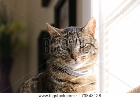 Tabby cat basking in the sun through the blinds