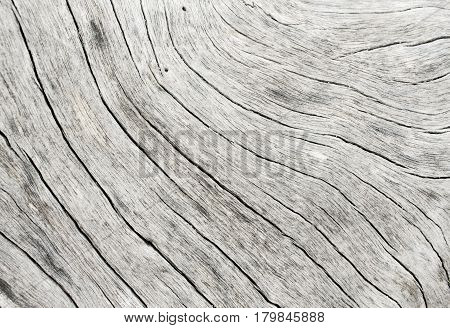 Grey wood texture closeup photo. White and grey wood background. White old tree near the sea. Curves and lines on natural rustic timber. Rough timber texture. Sea wood backdrop. Old weathered tree