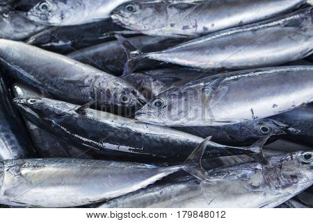 Bunch of fishes. Sea fishes pile on seafood market. Fresh sea fish for sell. Small mackerel bunch top view photo. Mackerel image for product package or food design. Raw fish cooking ingredient.