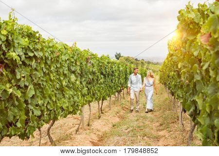Happy smiling couple in vineyard at harvest time. Couple of winegrowers walking in vineyard. Senior couple holding hands and walking in the vineyard.