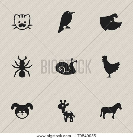 Set Of 9 Editable Zoo Icons. Includes Symbols Such As Philomel, Giraffe, Bedbug And More. Can Be Used For Web, Mobile, UI And Infographic Design.