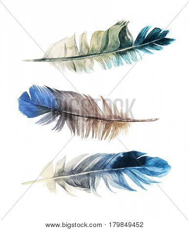 3 hand drawn watercolor feathers on white background