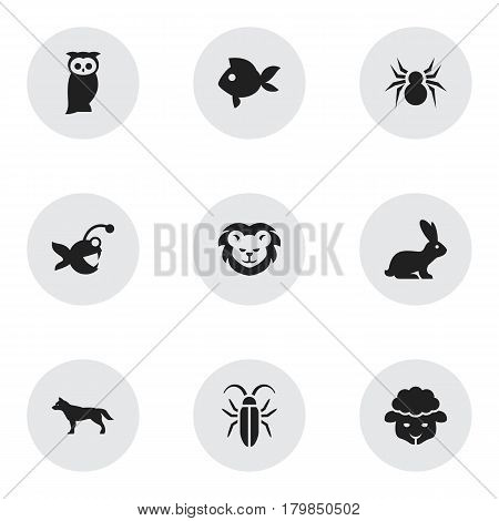 Set Of 9 Editable Zoo Icons. Includes Symbols Such As Fish, Turbot, Rabbit And More. Can Be Used For Web, Mobile, UI And Infographic Design.