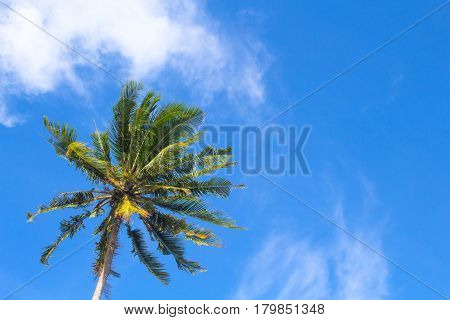 Coco palm tree on vibrant blue sky background. Sunny day on tropical island. Summer vacation banner template. Green palm tree with green leaves. Coconut palm in sunlight. Exotic nature relaxing view