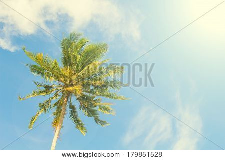 Palm tree and blue sky retro toned image. Tropical nature idyllic photo for banner background. Single coco palm top view. Skyscape with coconut palm tree. Exotic island vacation day. Green palm leaf