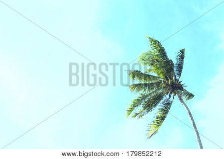 Coco palm tree on blue sky background. Sunny day on tropical island. Summer vacation banner template. Fluffy palm tree with green leaves. Coconut palms under sunlight. Exotic holiday beach day