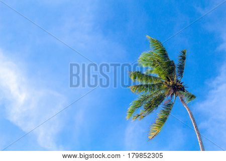 Coco palm tree on cloudy blue sky background. Sunny day on tropical island. Exotic wedding banner template. Green palm leaves. Coconut palms under sunlight. Optimistic summer holiday backdrop photo