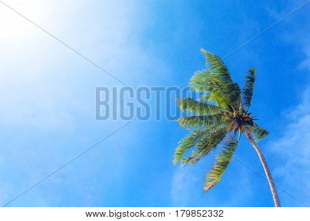 Coco palm tree on cloudy blue sky background. Sunny day on tropical island. Exotic wedding banner template. Green palm leaves. Coconut palms under sunlight. Optimistic summer vacation backdrop photo