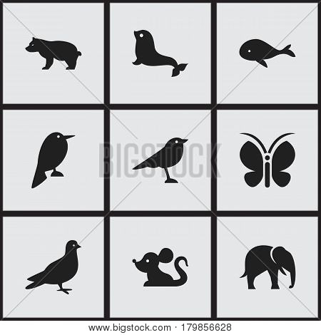 Set Of 9 Editable Animal Icons. Includes Symbols Such As Catbird, Pigeon, Polar Animal And More. Can Be Used For Web, Mobile, UI And Infographic Design.