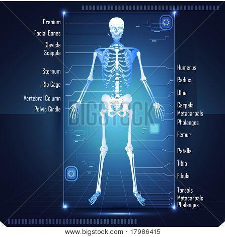 Scanning of Skeleton