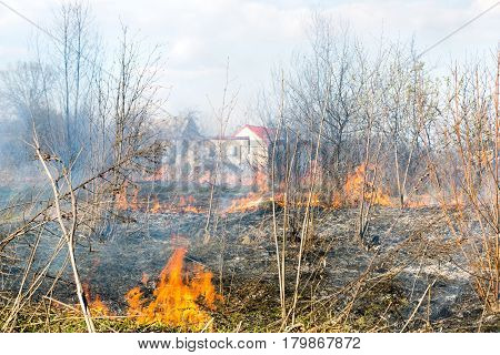 Fire on the field, burns dry grass, trees, and burn alive on the field.