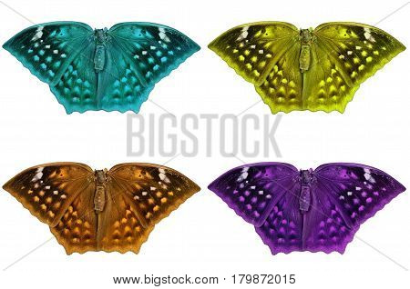 Beautiful color butterfly Isolated on white background