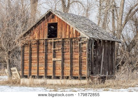 small rustic barn in an abandoned farm in Colorado with a  riparian cottonwood forest in background