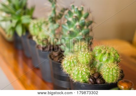 Group Of Little Variety Cactus stock photo