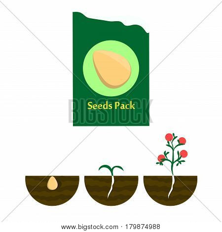 Seeds in the package, seed pods in the ground. Vector illustration