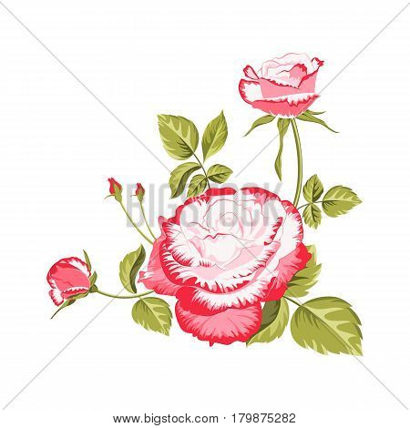 Beautiful bouquet of pink roses isolated on white background.Label with rose flowers.Spring of flower bud garland.Vector illustration.