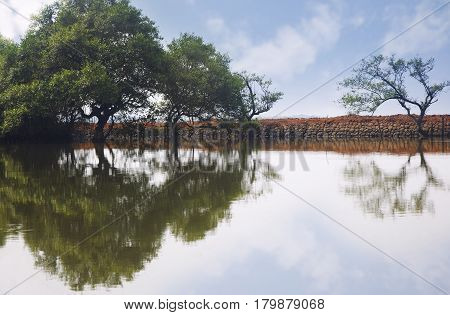 Trees reflected in the water. Horizontal photo with natural colors