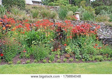 Flowers in a garden flower bed in summer