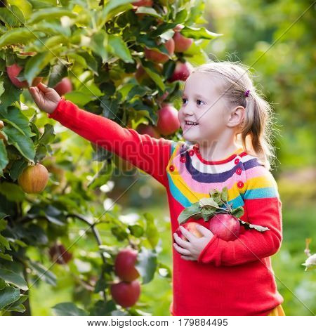 Little Girl Picking Apple In Fruit Garden