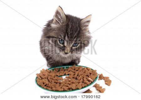 Kitten Eating Hard Food