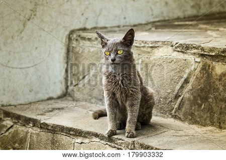 Portrait of alien cat with yellow eyes sitting on a footstep