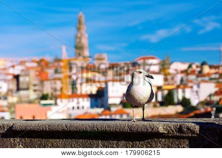 Seagull close-up on a background of urban roofs and bell tower Torre dos Clerigos - is one of the most characteristic symbols of Lisbon, Portugal