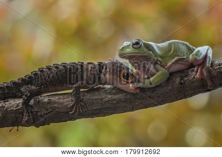 green tree frog and croc skink in the concept