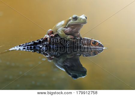 Frog and croc with reflections on the water