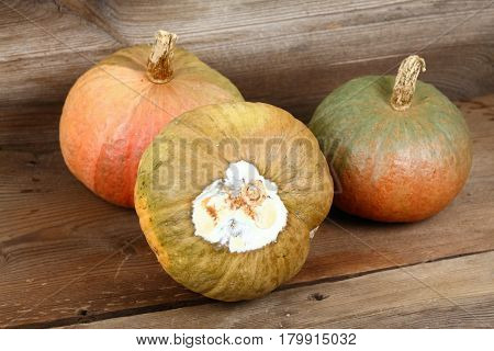 Rotten pumpkin on wooden board and healthy pumpkins at back