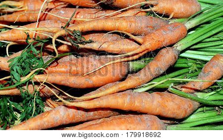 Fresh organic carrots displayed at a produce stand outside.