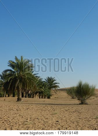 Sand blue sky and palms at desert in Dubai