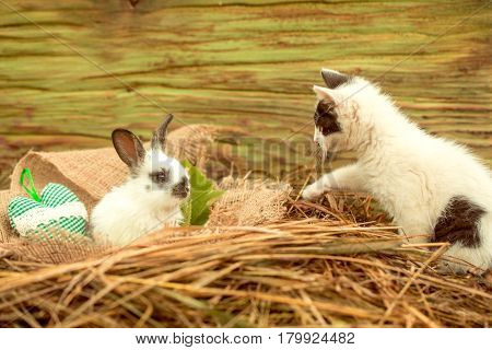Cute Small Rabbit And Little Cat Playing In Natural Hay