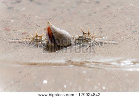 Beautiful Marine Shells In Sea