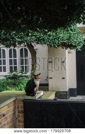 Cat in a park in London, England
