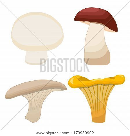 Vector illustration logo of edible mushroom fresh yellow chanterelle honey agaric mushroom porcini boletus champignon.