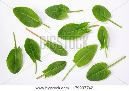 fresh sorrel leaves isolated over white background poster