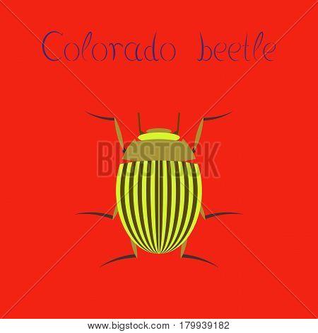 flat illustration on stylish background Colorado beetle